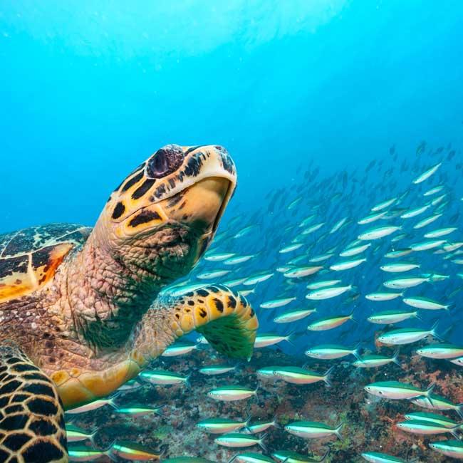 Tartaruga in mare